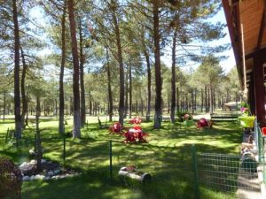 bar-camping-calonge-segovia (2)